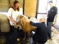 EARLY, ACCURATE PREGNANCY DETECTION - NO LONGER A TALL ORDER FOR MINIATURE HORSES?