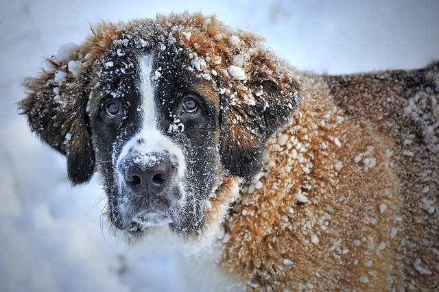 3 winter care tips for your pooch