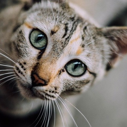 Common mistakes when planning a healthy feline diet