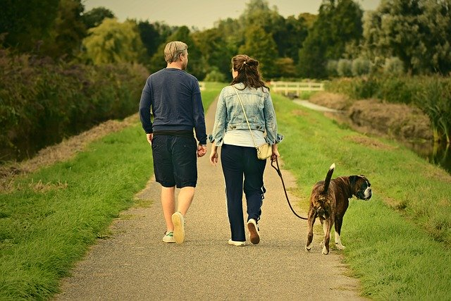 Common conditions to watch out for when walking your dog this summer