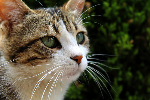Animal health: how a healthy feline diet can improve animal welfare
