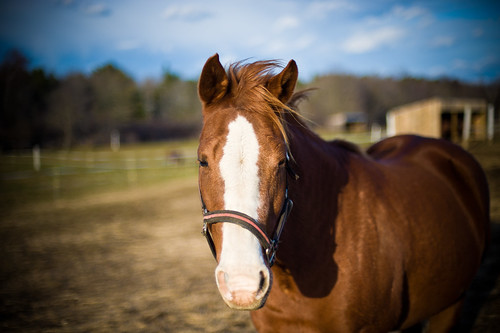 Monitoring the Pregnant Mare: How Often Should You Ultrasound?