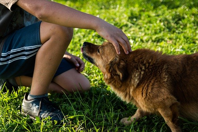 Dangerous dog sickness bug sweeping the UK