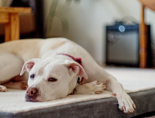 Preparing pets and their owners for an ultrasound scan