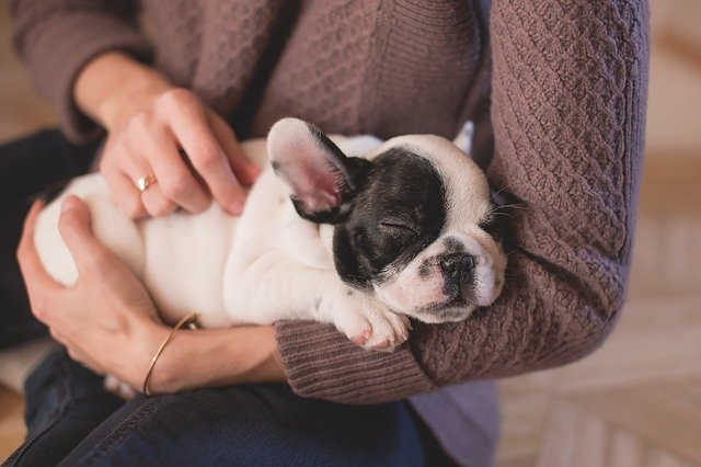 Tips for first time dog breeders