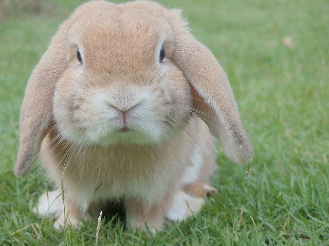 4 of most common illnesses in rabbits