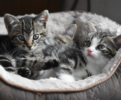 3 top tips for keeping your cat safe when moving house