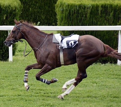 Promoting ultrasound to improve sport horse performance