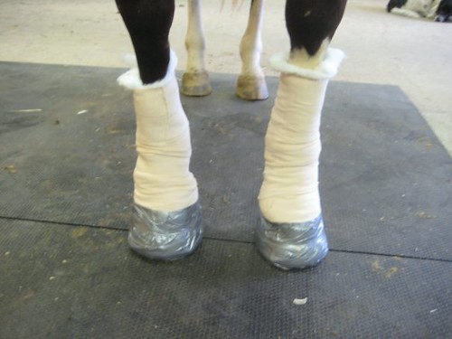 Keep your pony free of laminitis with these care tips