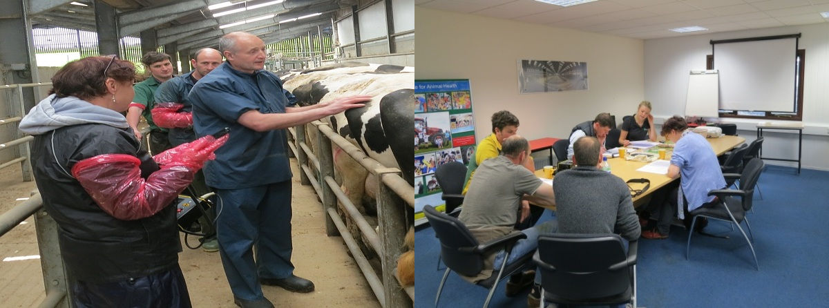 Defra approved cattle scanning vet image solutions
