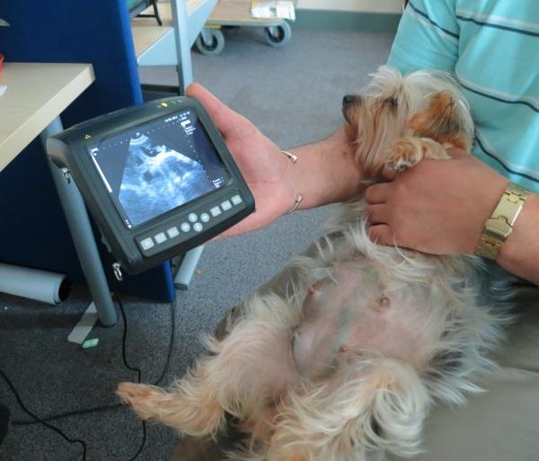 MSU Dog Scan Vet Image Solutions
